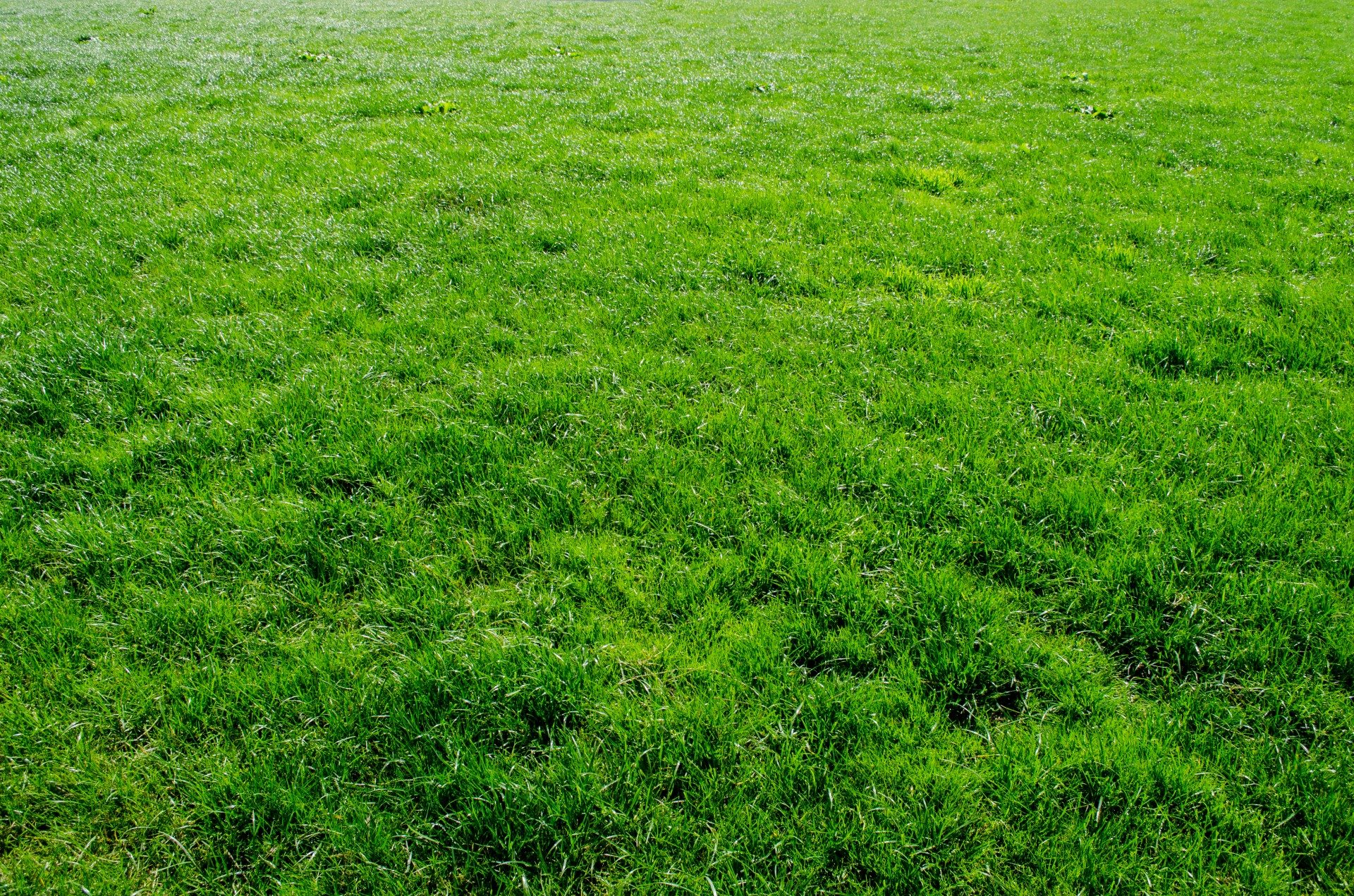 how to make grass green without chemicals